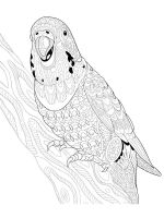 zentangle-parrot-coloring-pages-18