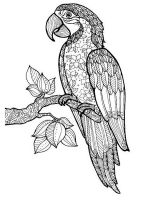 zentangle-parrot-coloring-pages-3