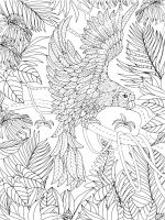 zentangle-parrot-coloring-pages-4