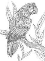 zentangle-parrot-coloring-pages-5