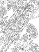 zentangle-parrot-coloring-pages-6