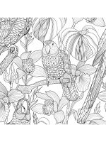 zentangle-parrot-coloring-pages-8