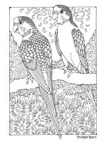 zentangle-parrot-coloring-pages-9