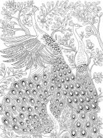 zentangle-peacock-coloring-pages-1