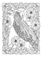 zentangle-peacock-coloring-pages-11
