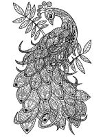 zentangle-peacock-coloring-pages-13