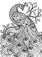 zentangle-peacock-coloring-pages-6