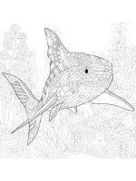 zentangle-shark-coloring-pages-7