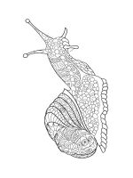 zentangle-snail-coloring-pages-11