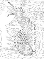 zentangle-snail-coloring-pages-2