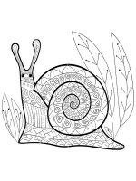 zentangle-snail-coloring-pages-4