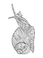 zentangle-snail-coloring-pages-8