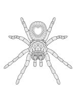 zentangle-spider-coloring-pages-7