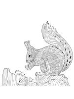 zentangle-squirrel-coloring-pages-13