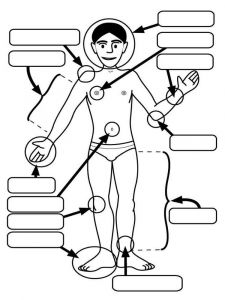 educational-human-body-coloring-pages-1