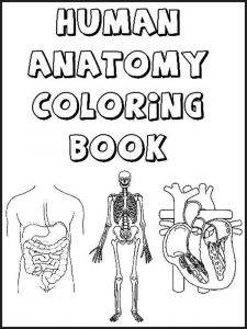 educational-human-body-coloring-pages-2