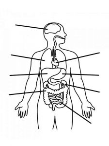 educational-human-body-coloring-pages-9