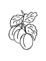 Apricot-coloring-pages-21