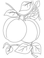 Apricot-fruits-coloring-pages-10