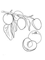 Apricot-fruits-coloring-pages-3