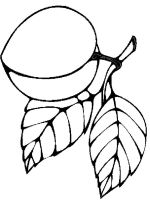 Apricot-fruits-coloring-pages-4