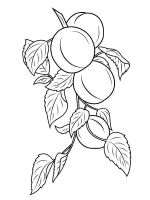 Apricot-fruits-coloring-pages-7