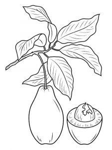 Avocado-fruits-coloring-pages-2