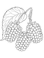 Blackberry-berries-coloring-pages-12
