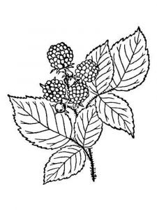 Blackberry-berries-coloring-pages-5
