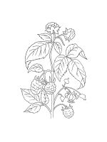 Blackberry-coloring-pages-2