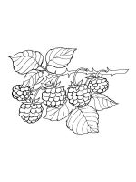 Blackberry-coloring-pages-3