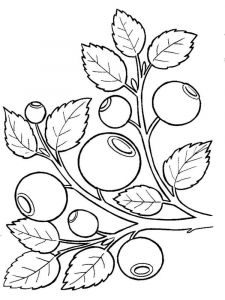 Blueberry-berries-coloring-pages-10