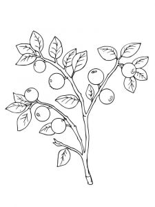Blueberry-berries-coloring-pages-5
