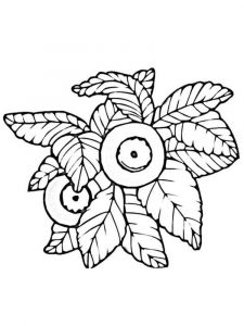 Blueberry-berries-coloring-pages-7