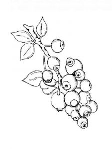 Blueberry-berries-coloring-pages-8