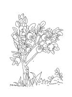Blueberry-coloring-pages-5