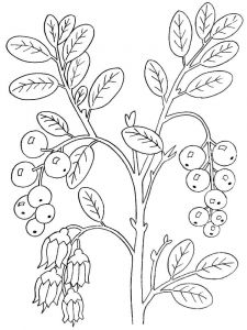 Cowberry-berries-coloring-pages-3