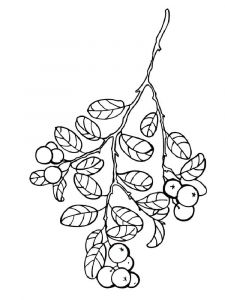 Cowberry-berries-coloring-pages-4