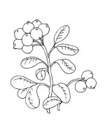 Cowberry-berries-coloring-pages-5