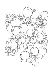 Cowberry-berries-coloring-pages-6