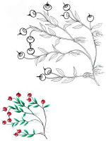 Cranberry-berries-coloring-pages-3