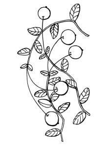 Cranberry-berries-coloring-pages-4