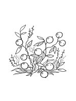 Cranberry-coloring-pages-1