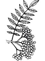 Rowan-berries-coloring-pages-12