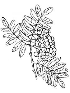 Rowan-berries-coloring-pages-2