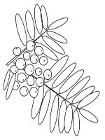 Rowan-berries-coloring-pages-8