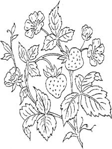 Strawberry-berries-coloring-pages-11