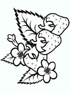 Strawberry-berries-coloring-pages-13