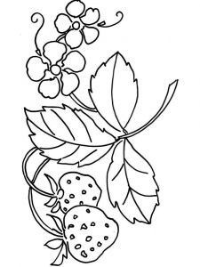 Strawberry-berries-coloring-pages-14