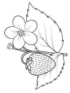 Strawberry-berries-coloring-pages-15